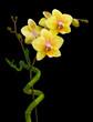 Fototapeten,orchid,horizontale,botanisch,botanik