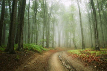 road in the woods trough the fog