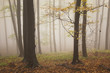 autumn landscape from a forest with beautiful colors and fog