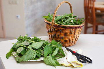 Fresh gathered nettles in basket on the table in the kitchen