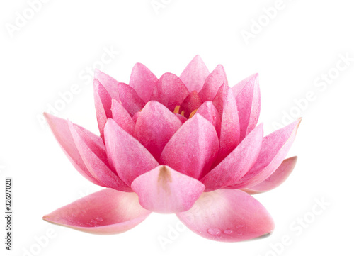 Foto op Plexiglas Lotusbloem Pink water lily closeup isolated over white background