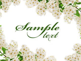 White flower border card isolated on white background