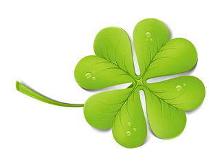 Green clover with drops