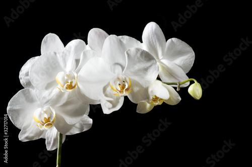 Piękne orchidea