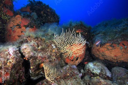 diving liguria italia