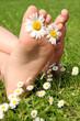 Füße und Margerite