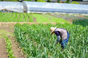 畑で働く女性