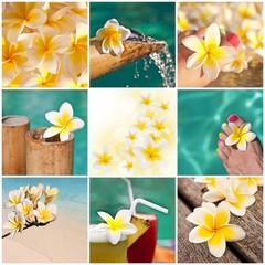 Collage fleurs de frangipanier