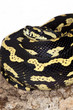 serpente giallo e nero