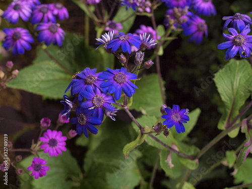 Purple and Pink flowers on stems in Bloom