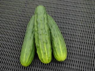 Gartengurken, frisch geerntet