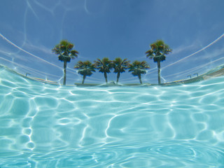 Underwater palm tree pool view abstract.