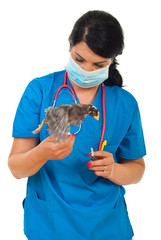 Doctor vet with chick in motion