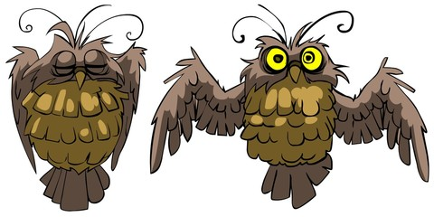 sleeping owl  and  awakened owl