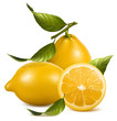 Vector. Fresh lemons with leaves.