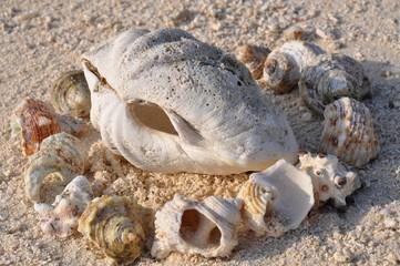 Muschelkreis am Meeresstrand
