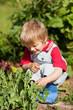 junge beobachtet pflanzen