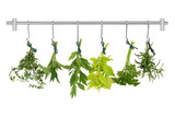 Herb Leaves Drying