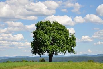 Obstbaum vor weiter Landschaft