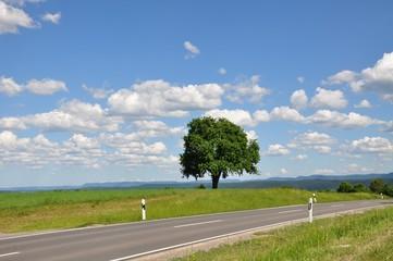 Landstraße, Baum, weite Landschaft