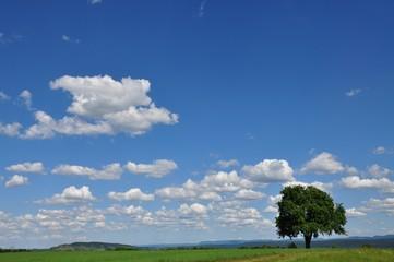 Einsamer Baum in weiter Landschaft