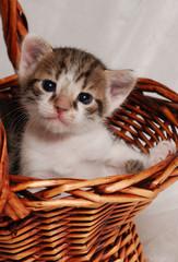 cute kitten in the basket