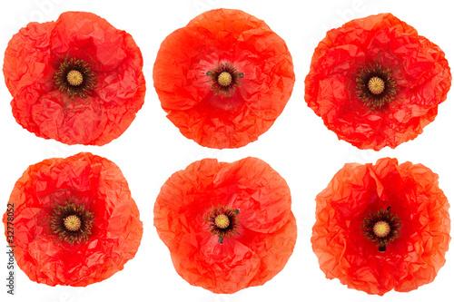 Poppy flower heads