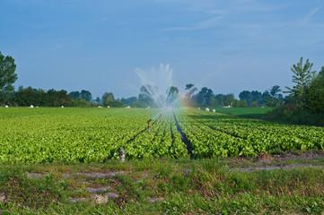 irrigare campo di ortaggi