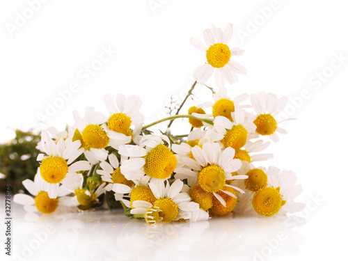 Chamomiles isolated on a white background
