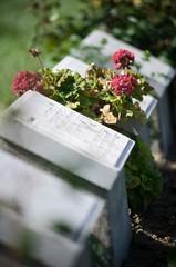 War Graves near the Anzac Commemorative Site in Gallipoli