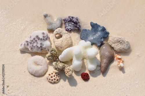 Korallen am Strand