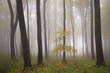 isolated tree in a misty colorful forest at autumn