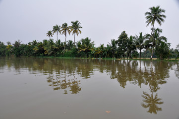 Palms along canals and lakes in Kerala, India