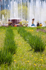city park in summer with flowerbed in front