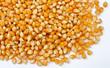 Leinwanddruck Bild - maïs
