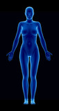Female figure in anatomical position anteriror view poster