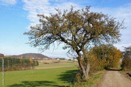 Arzlohe