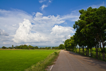 Country road along the paddy in Thailand