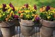 Tres macetas con flores de colores