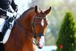 Fototapeten,pferd,fringe,person,mädchen
