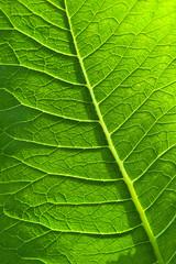 foglie 1674