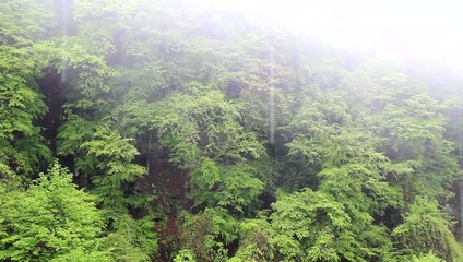 雨降る新緑の山 Rain in Fresh Green of the Mountain