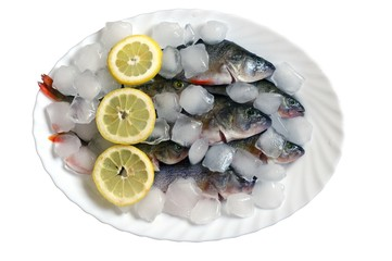 fresh fish in ice