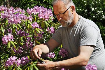Mann mit Rhododendron
