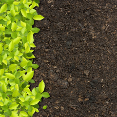green plants growing on soil manure.