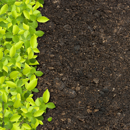 green plants growing on soil manure.