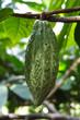 Kakao II
