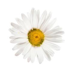 daisywheel