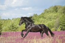 Dieren Paarden