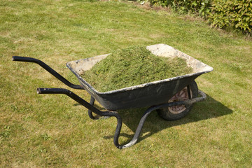 Grass Cuttings